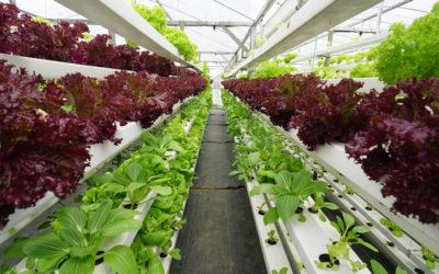Alimentar o planeta com sustentabilidade dependerá de inovação