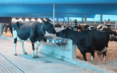 Brasil tem a primeira instalação de compost barn destinada à pesquisa