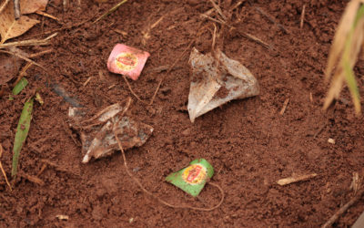 Cientistas utilizam metodologia holandesa para avaliar qualidade do solo