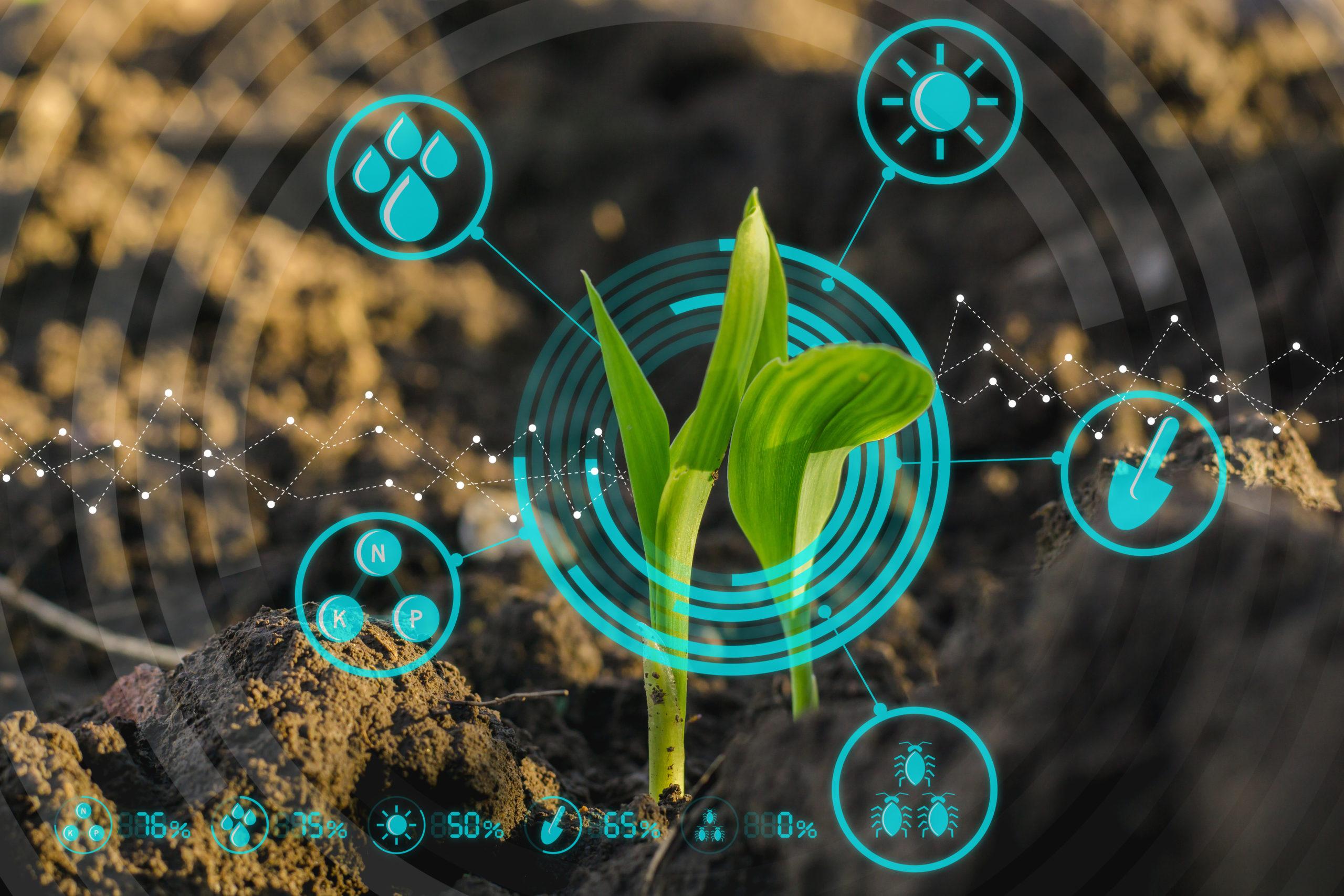 O microbioma e sua importância para a produtividade e sustentabilidade da agricultura