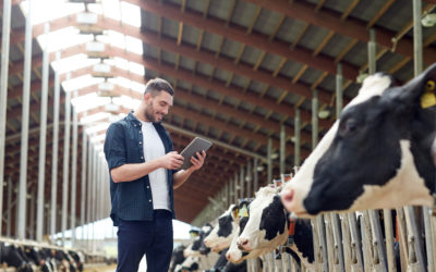 O leite na era 4.0: a importância da inovação na produção