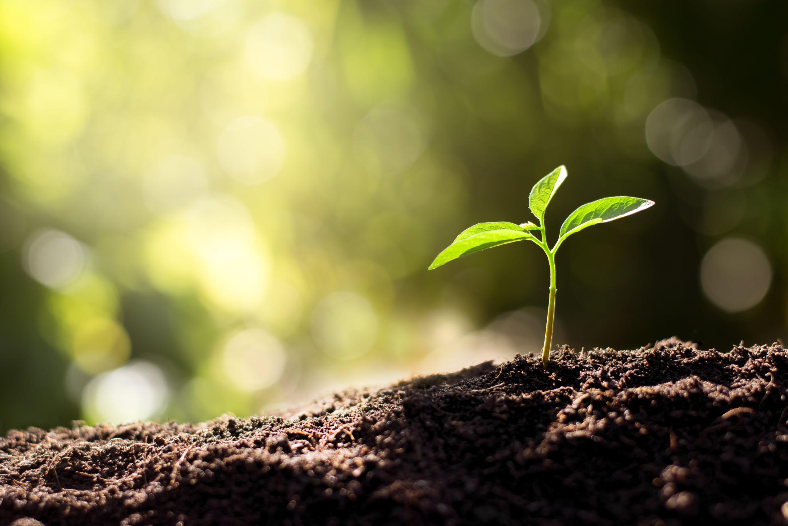 Pesquisa mede radiação no solo para combater processo erosivo