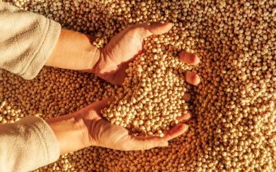 Brasil produz alimentos para o mundo com segurança