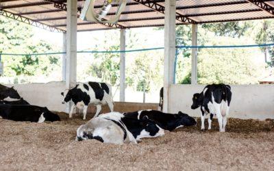 A importância de um projeto de construção e execução de compost barn