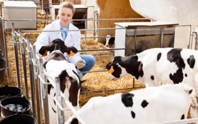 Medidas de biosseguridade na bovinocultura leiteira
