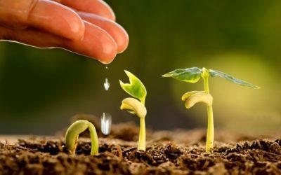 Manejo água, solo e planta: como essa interação pode melhorar a produtividade