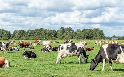 Pastos biodiversos, um passo adiante?