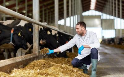 Tecnologias em nutrição animal: aumento na produtividade de forma sustentável