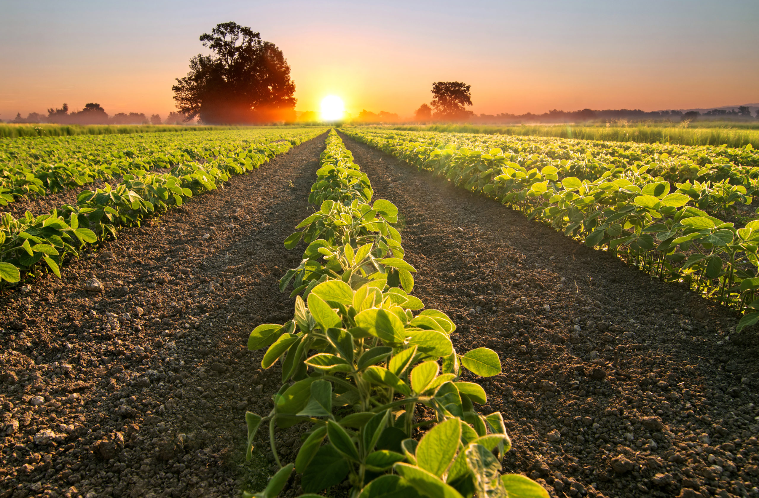Mercado agrícola segue promissor em 2021, diz Presidente da ABIMAQ