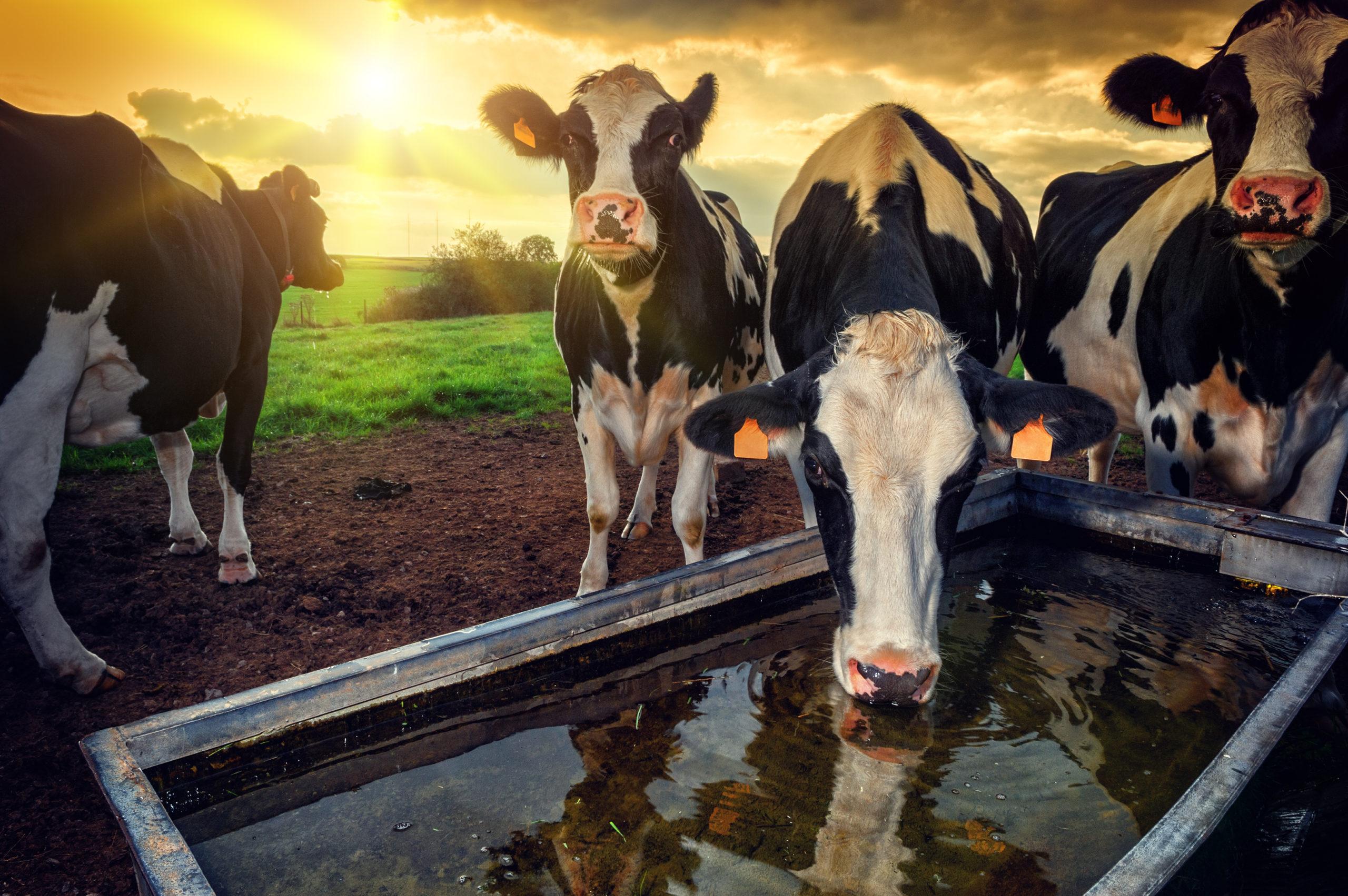 Programa monitora água em propriedades leiteiras e economia chega a 19 milhões de litros em 2020