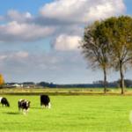 digital-agro-2021-phode