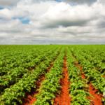 digital-agro-2021-ubyfol