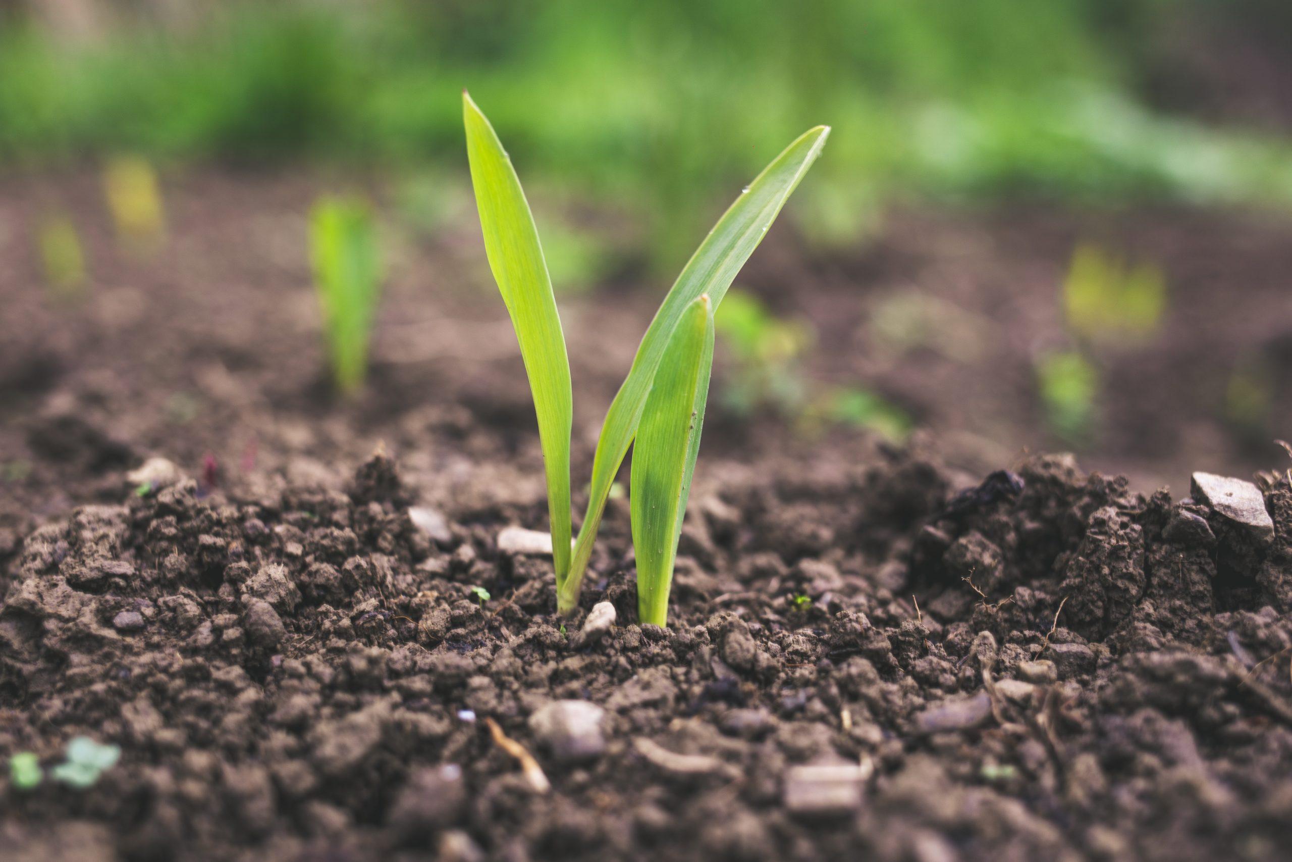 Irrigação de precisão: agtech cria sistemas acessíveis para agricultores