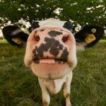 digital-agro-biometria-animal