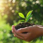 produtor-de-soja-podera-se-inscrever-gratuitamente-para-teste-produtividade-do-solo