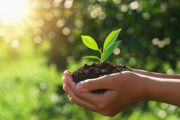 Produtores de soja poderão participar gratuitamente de teste de produtividade do solo