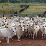 gestão-a-pecuária-digital-agro