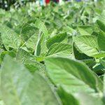 nematicida-biologico-digital-agro
